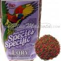 Pretty Bird Especial Loris