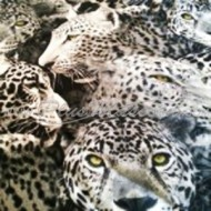 Colchones Relax Dog Jaguar Blanco y Negro