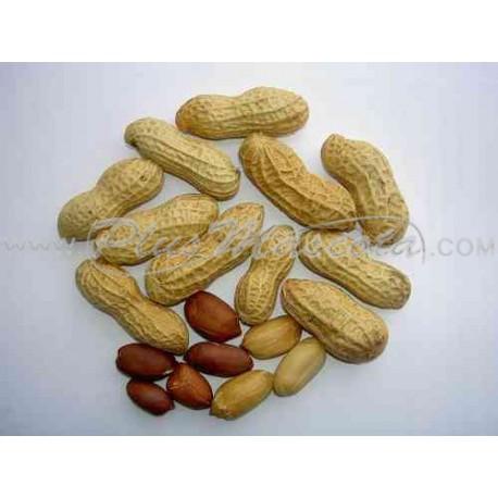 Cacahuetes con Cáscara para Loros