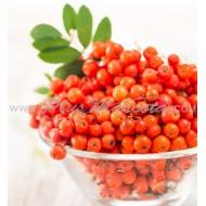 Frutos del Árbol Serbal de los Cazadores para Loros