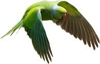 Aves / Loros